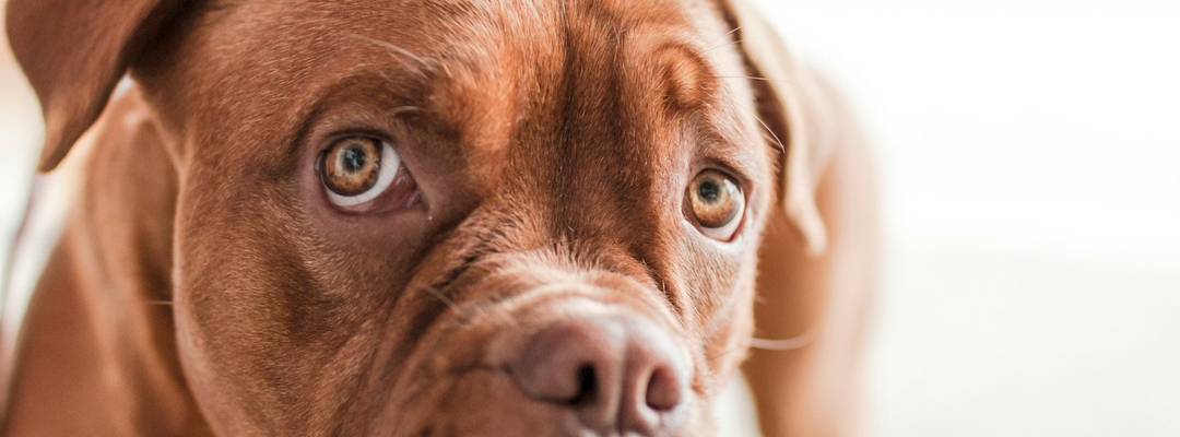 Bad Breath In Dogs What Causes It And What You Can Do